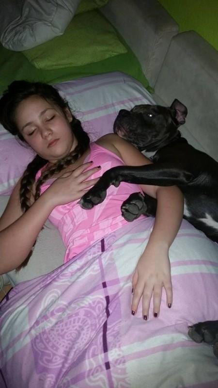 dormindo com cachorro